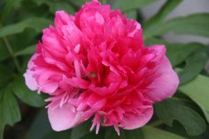 Fleur shiatsu